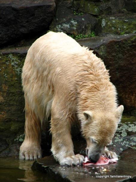 Berlin Zoo April 2008 073